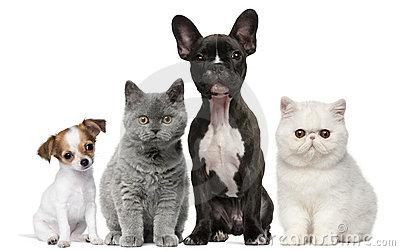 Jõelähtme valla koerte ja kasside pidamise eeskiri