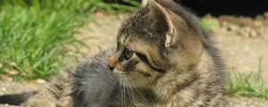 Vald toetab lemmikloomade kiibistamist kuni 30.06
