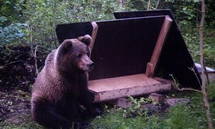 Vandjala kandis on karu nähtud!