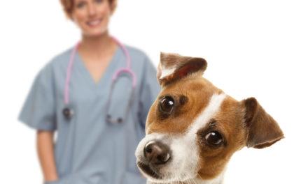Kasside/koerte marutaudi vastane vaktsineerimine